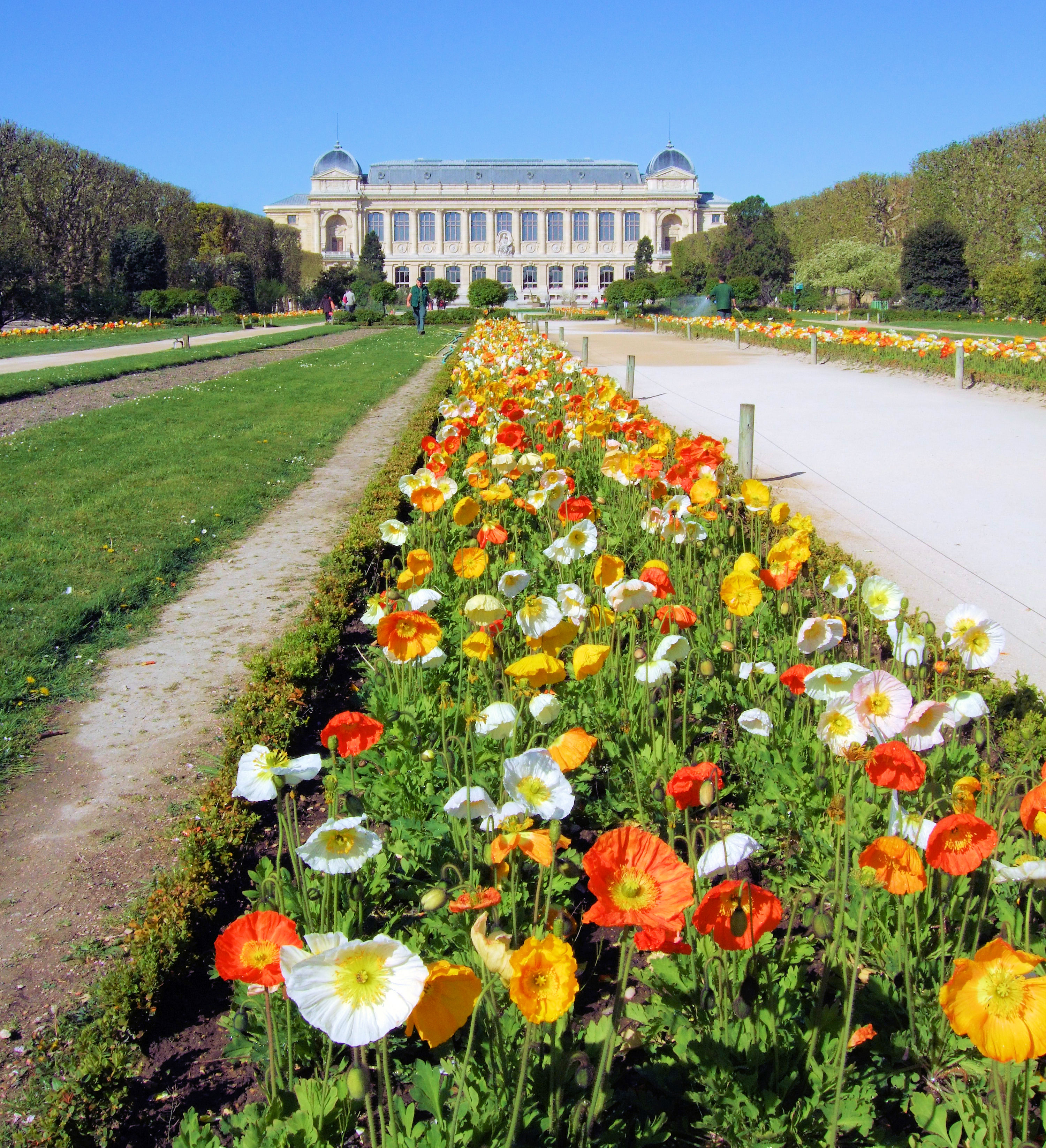 File spring in the jardin des plantes paris for Jardin plantes paris