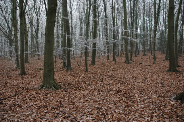 Standish Wood - geograph.org.uk - 1125519