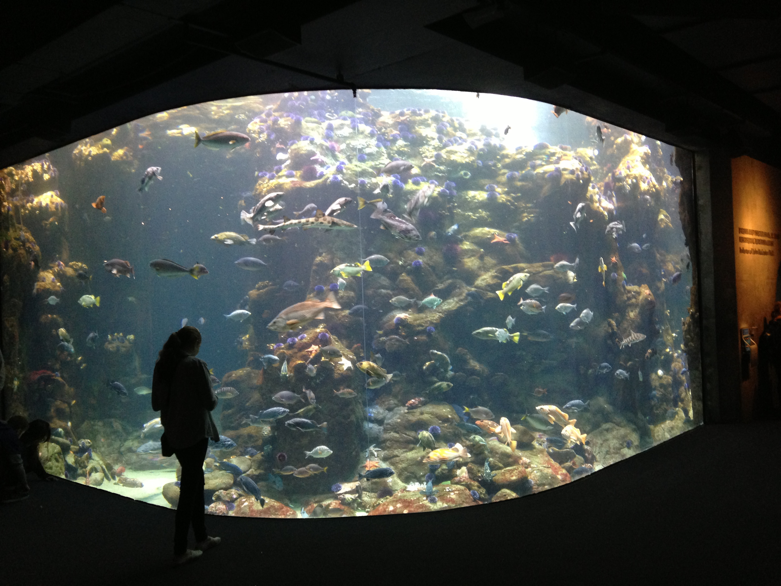 Steinhart Aquarium Gallery