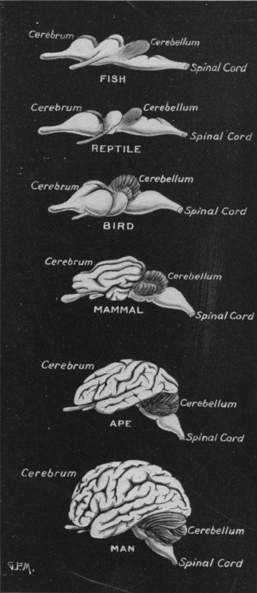 Mózgi kręgowców