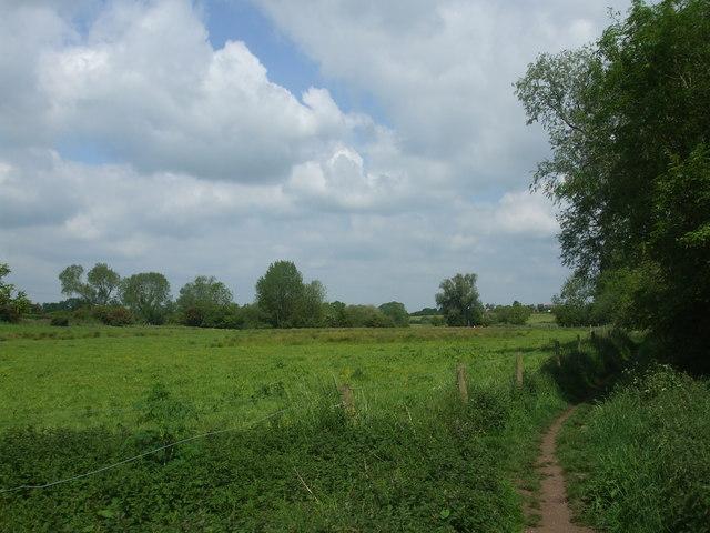 The Tiffey valley walk - geograph.org.uk - 1327982