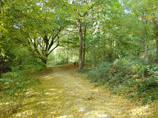 Thorndon Country Park - geograph.org.uk - 26871