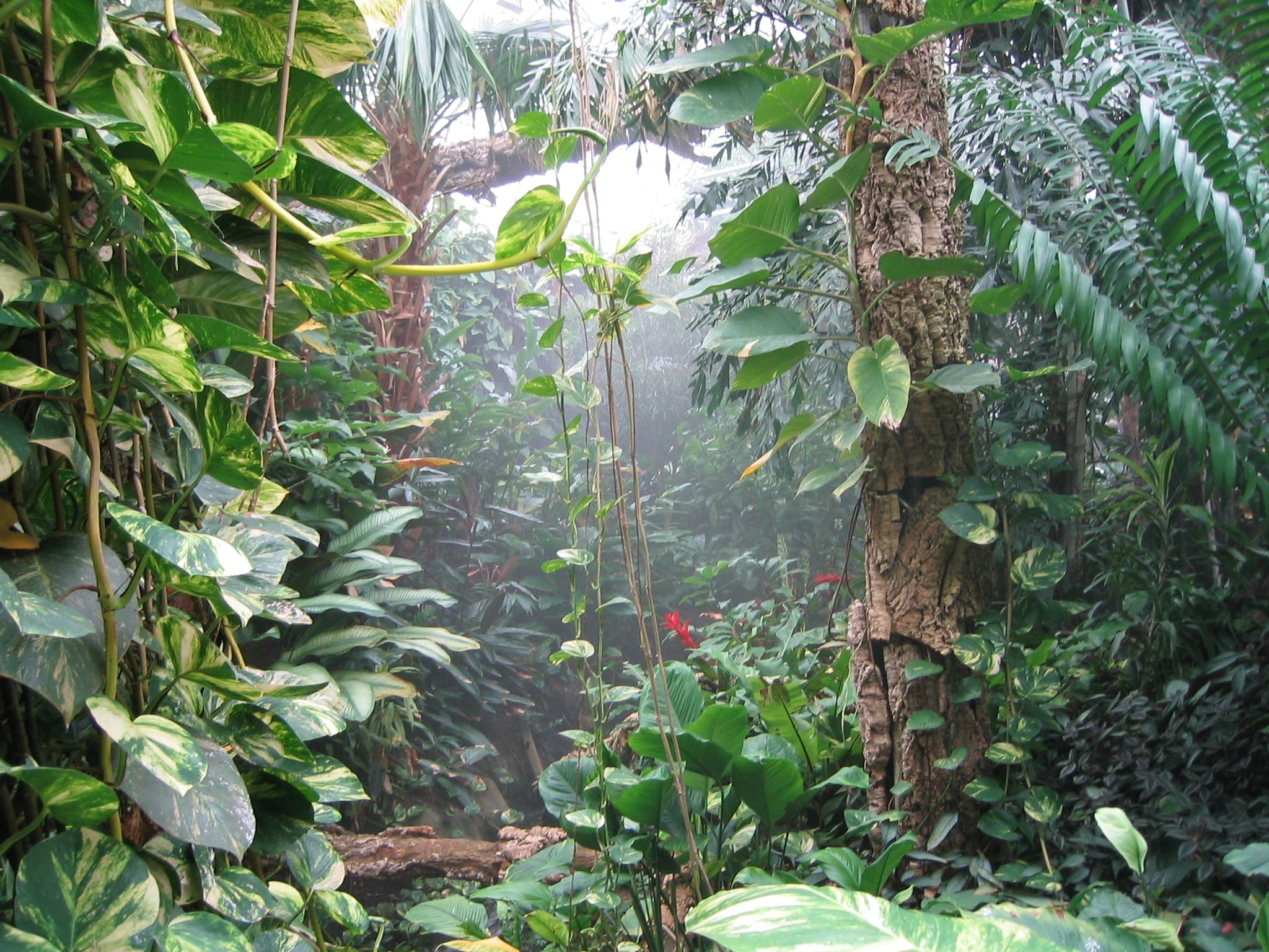 Description tropicalworld forest2007 jpg
