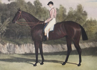Voltaire (racehorse) British-bred Thoroughbred racehorse