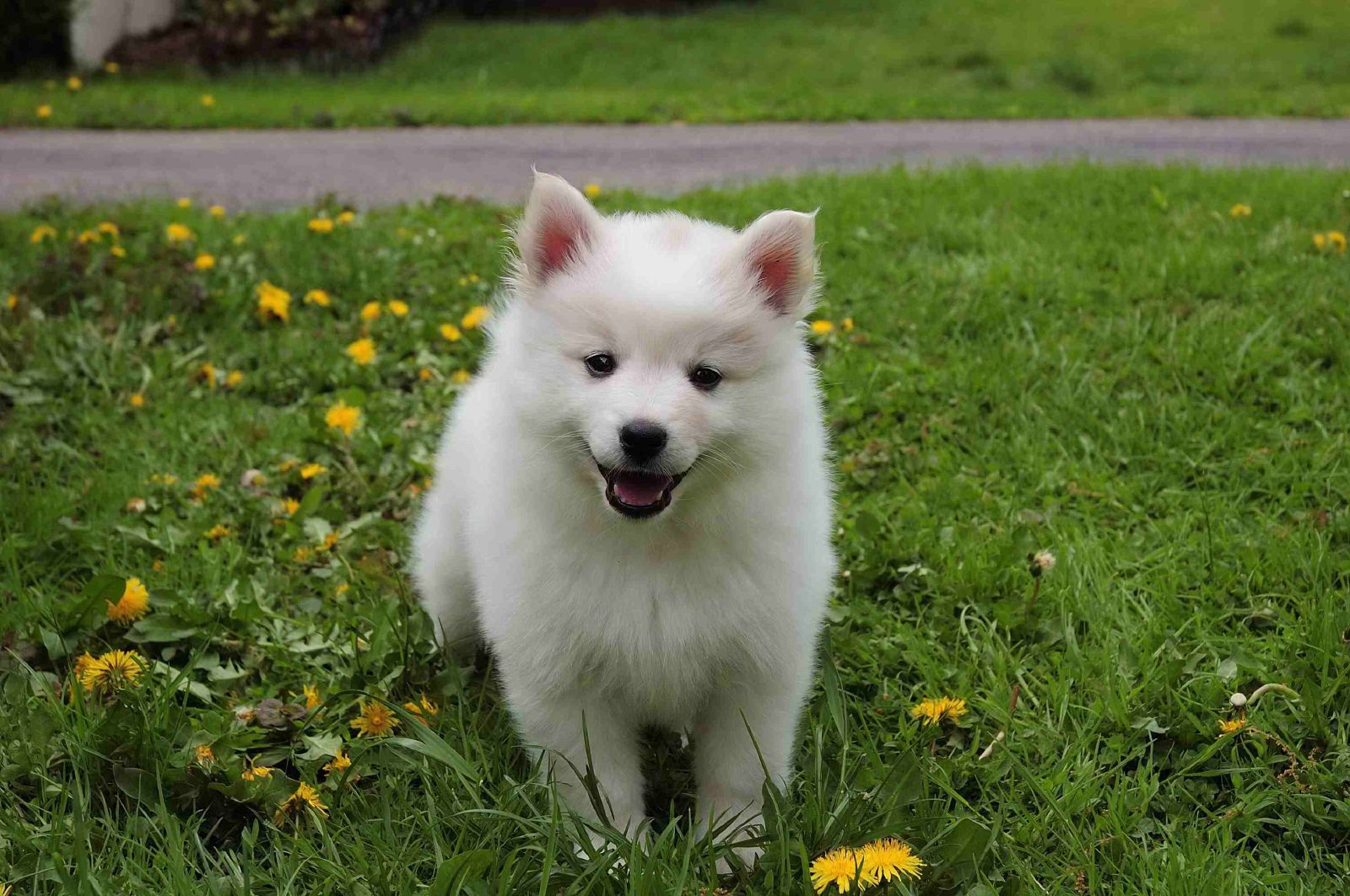 Cutest Dog Breeds In India