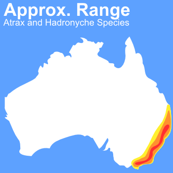 spider bite symptoms australia. spider bite Information