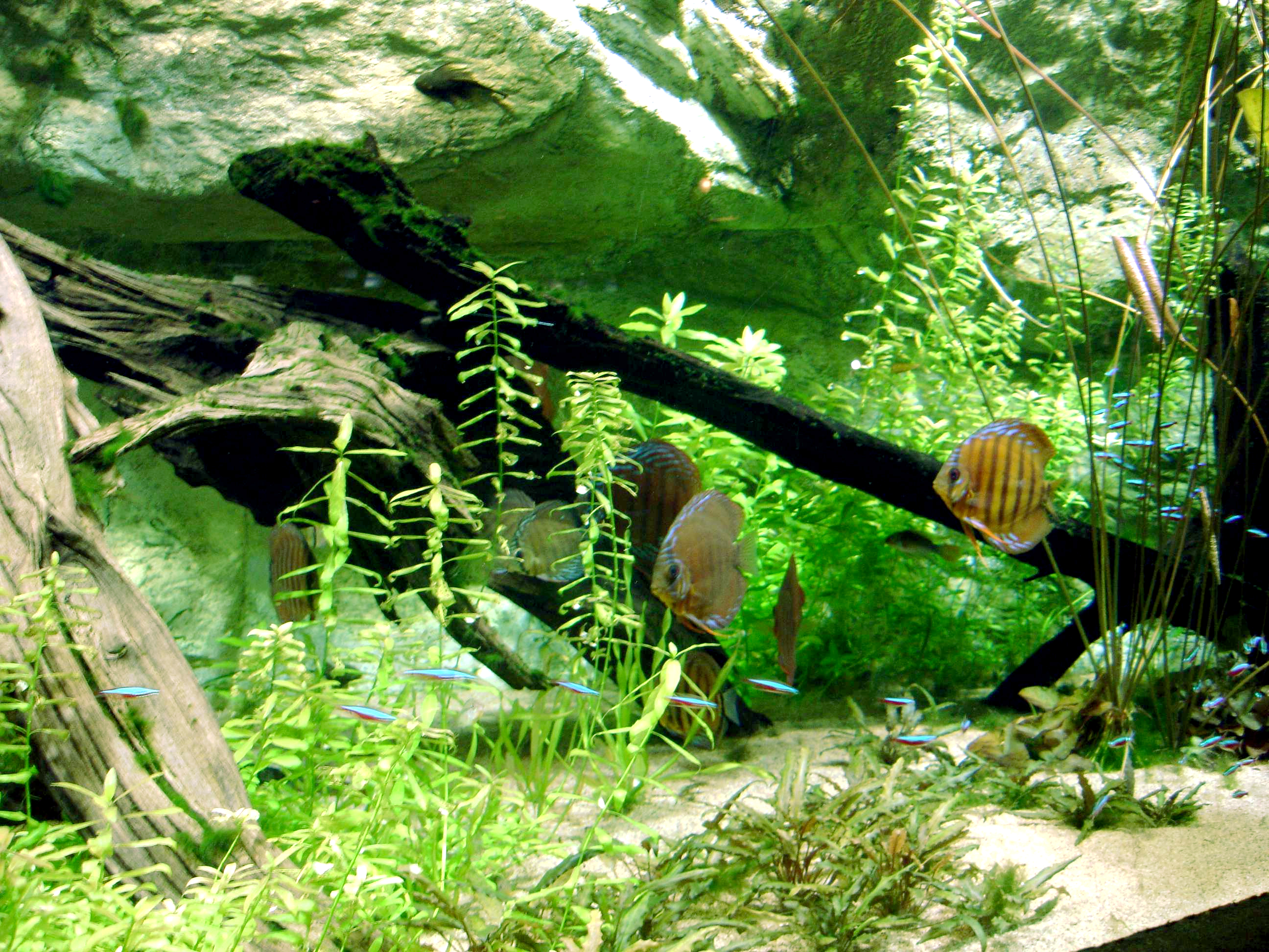 Decoration Aquarium On Les Mais Sur Le Terreau Ou Gravier