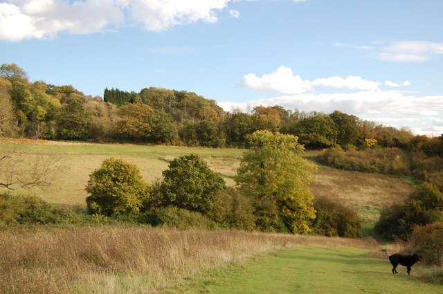 Autumn in Hadleigh Castle Country Park - geograph.org.uk - 1011126