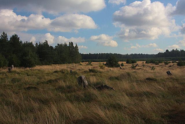 Brandon Park Heath - geograph.org.uk - 1011868