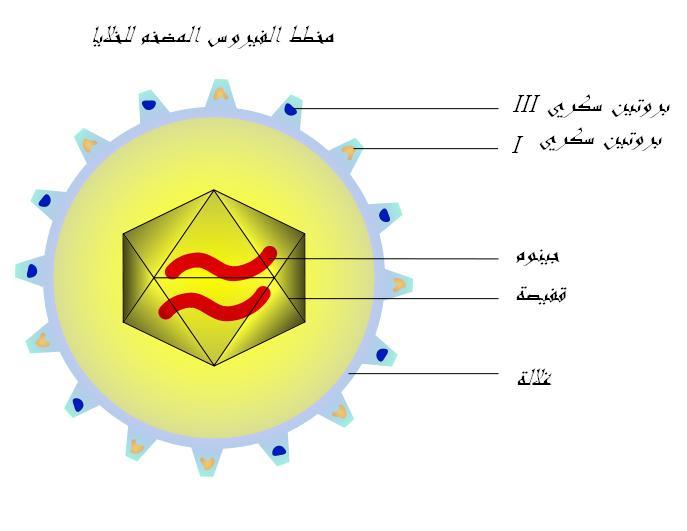 فيروس wikimedia commons