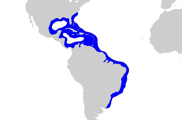 Distribución del tiburón limón