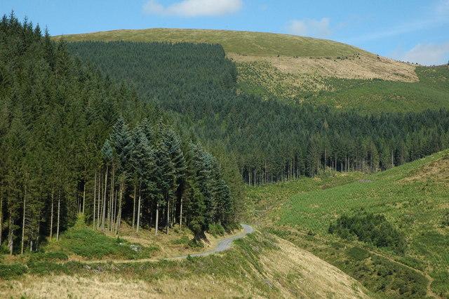Dyfi Forest - geograph.org.uk - 1453507