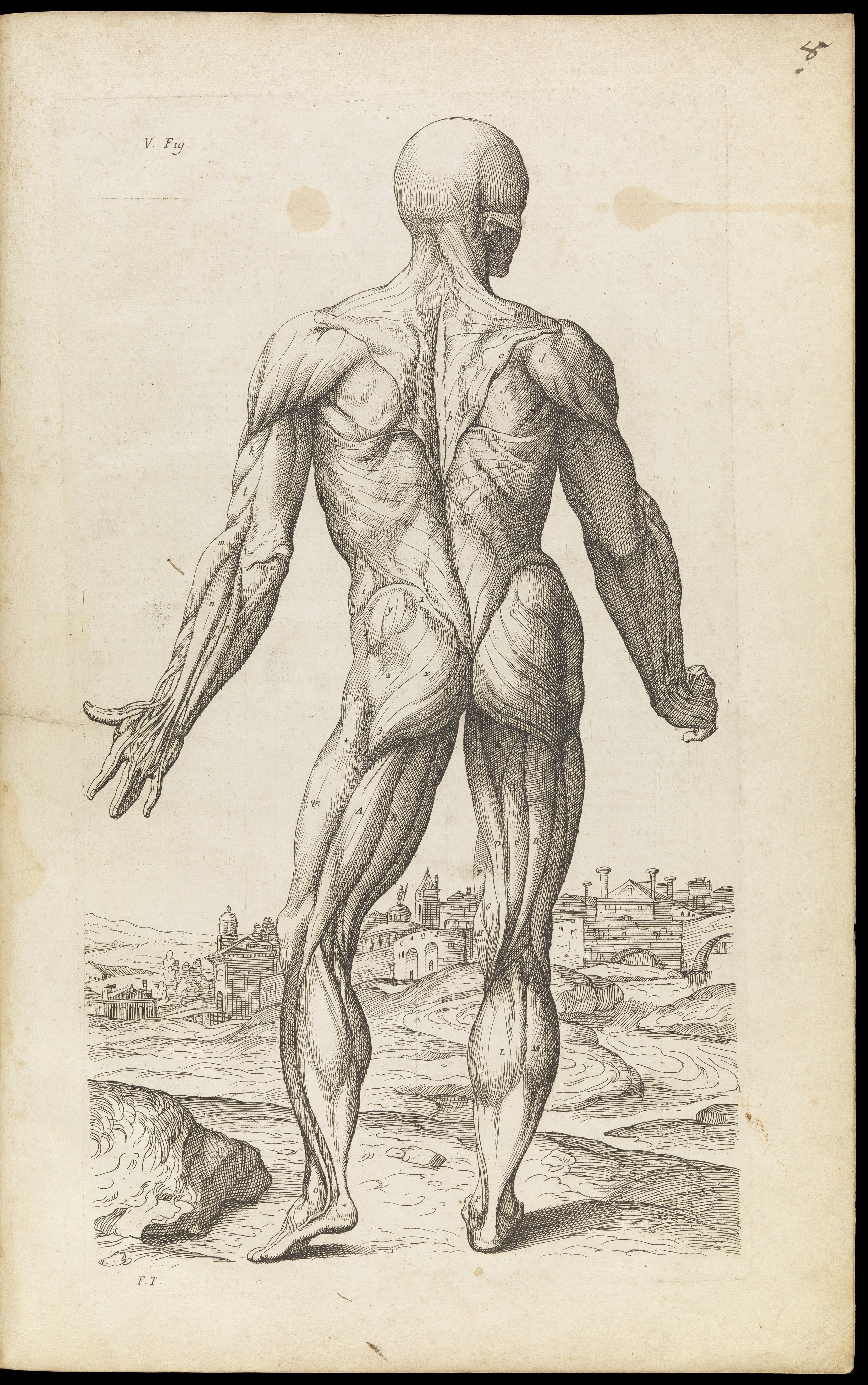 Charmant Menschliches Gesicht Anatomie Für Künstler Ideen - Anatomie ...