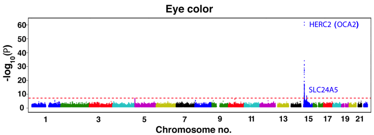 File:GWAS of human eye color in the Cape Verdean cohort.png