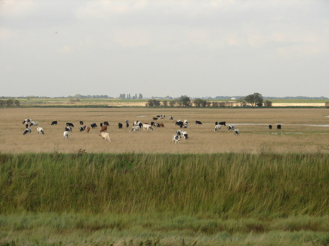 Grazing on Frampton Marsh - geograph.org.uk - 1432540