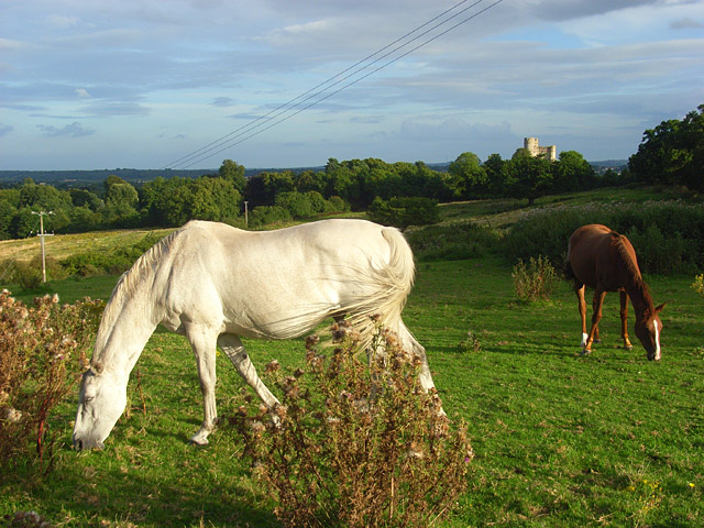 Horses, Donnington - geograph.org.uk - 937202