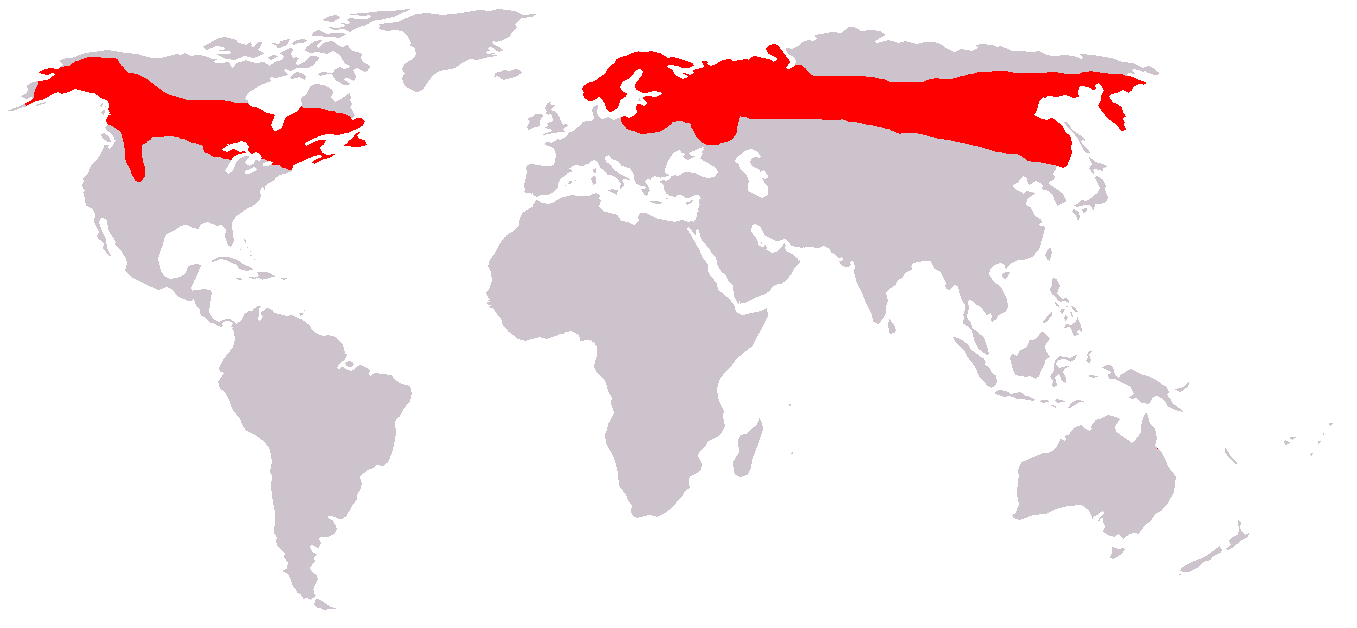 Map showing the distribution of moose around the world