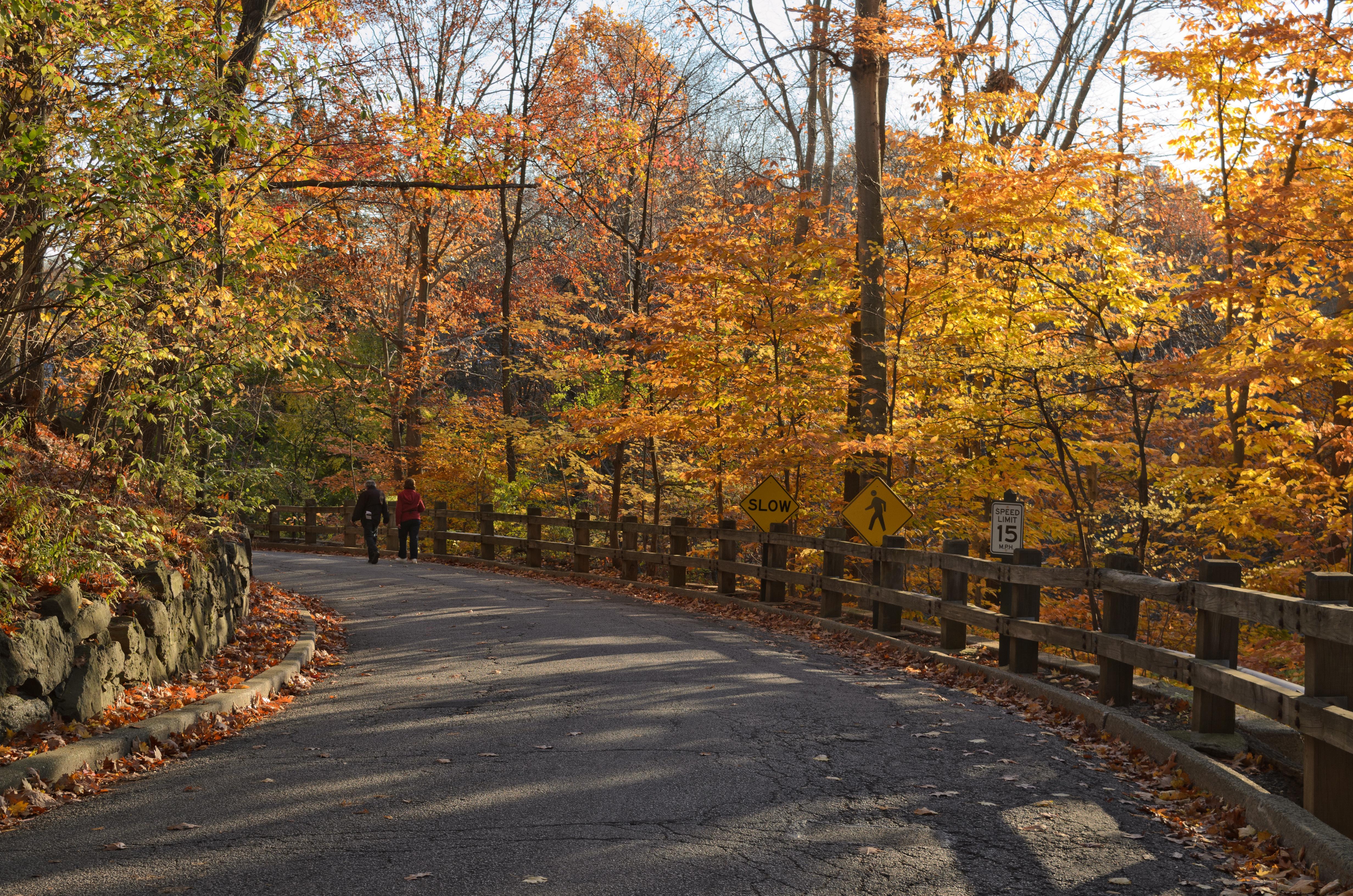 File:New York Botanical Garden November 2015 004.jpg - Wikimedia Commons