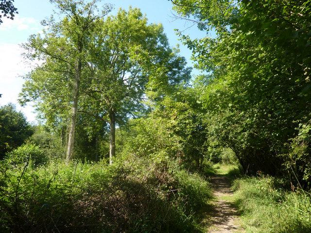 Path through Bradfield Woods - geograph.org.uk - 1451867