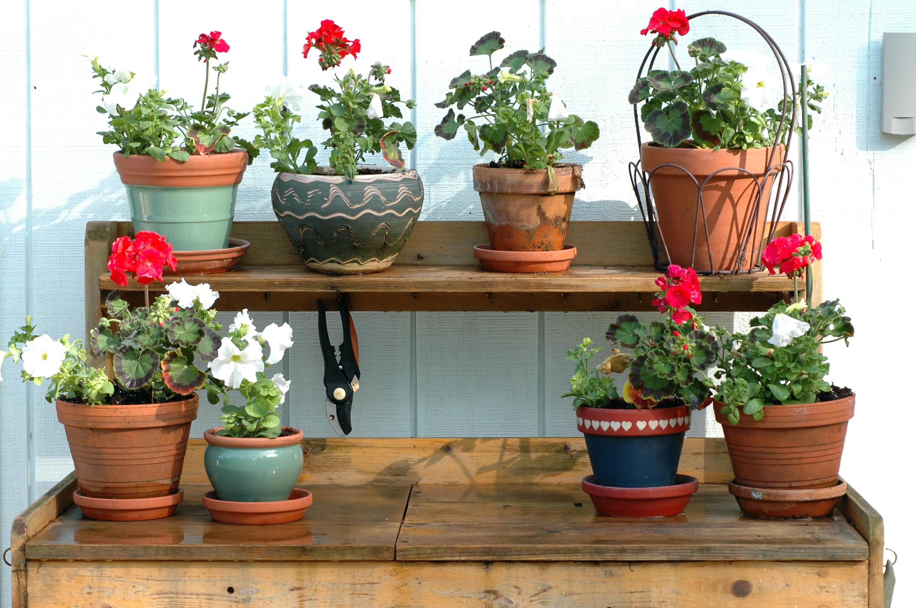 plant potting table