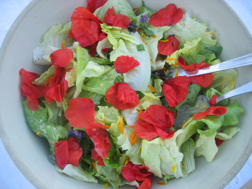 Salade mets wikip dia for Eliminer les vers des salades