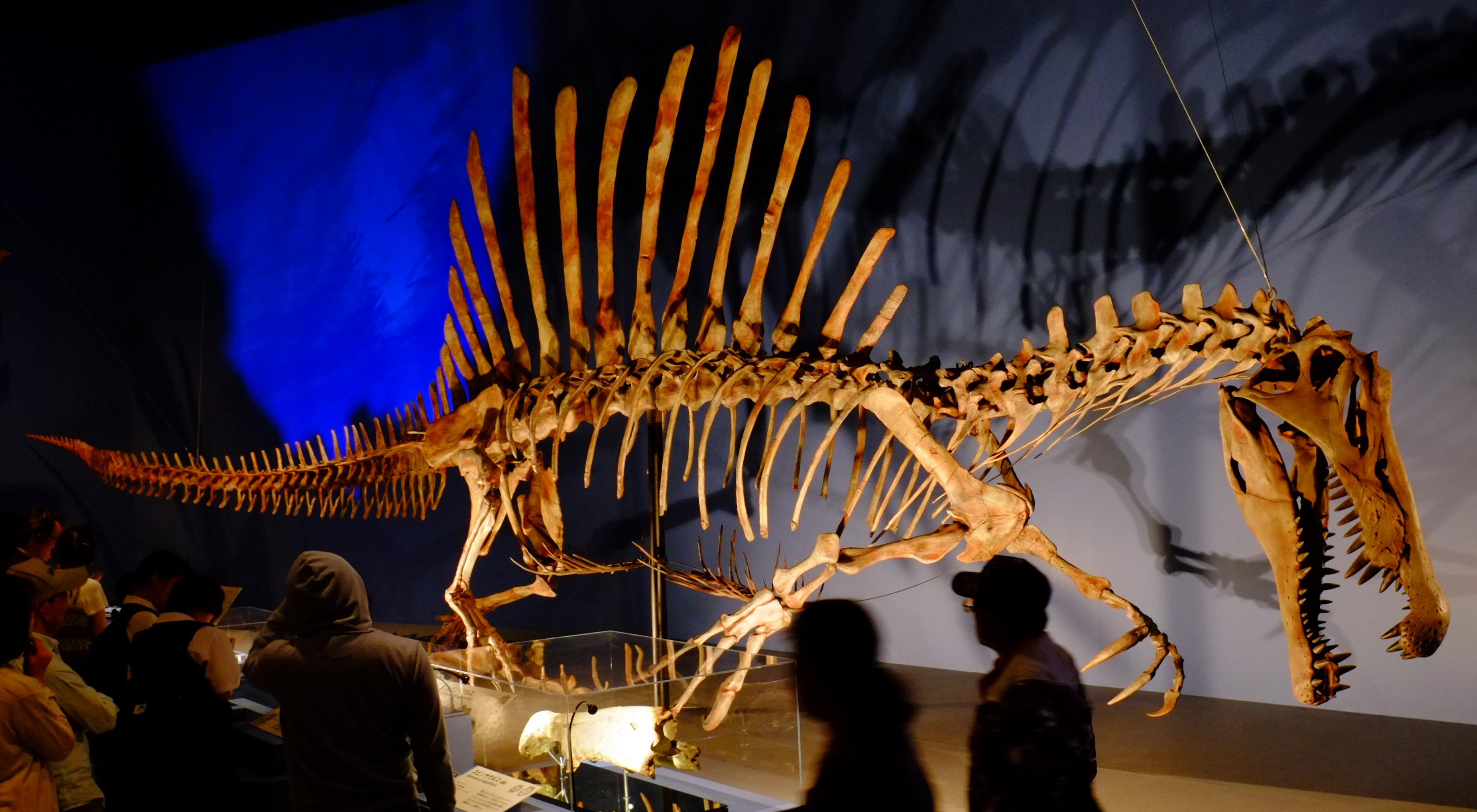 Spinosaurus - Wikipedia