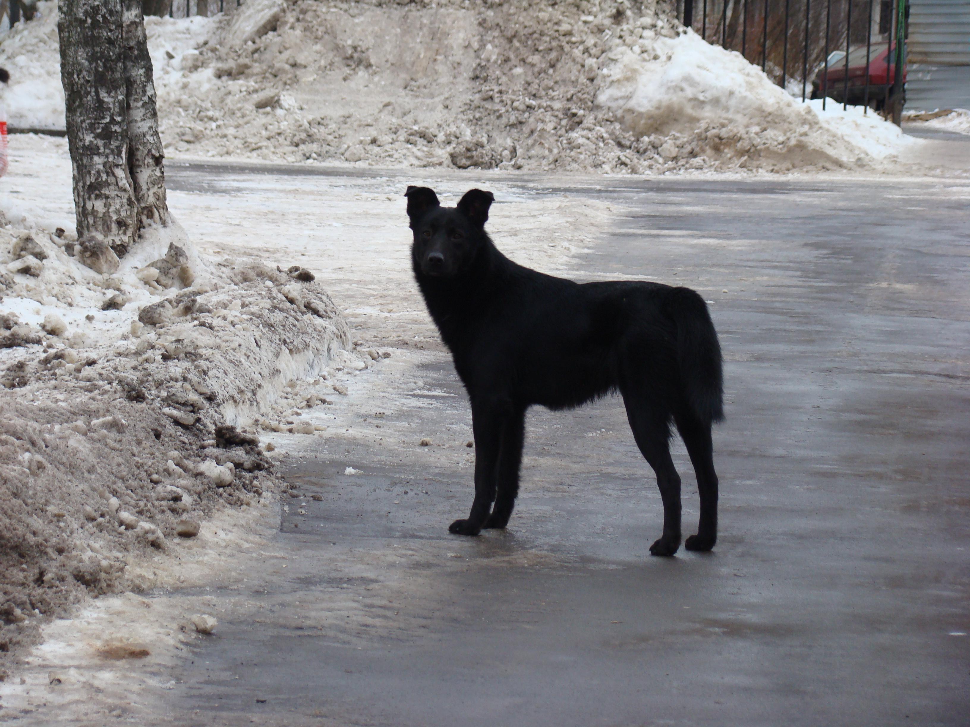 Más inteligente Perros Moscú Perros Callejeros