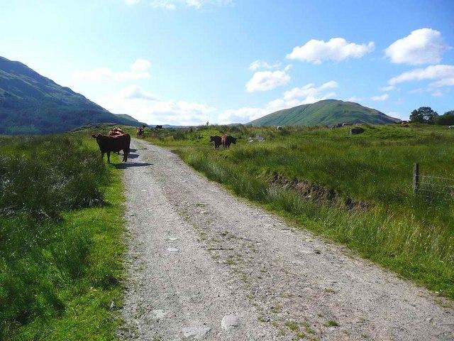 The Glen Finglas track - geograph.org.uk - 1396268