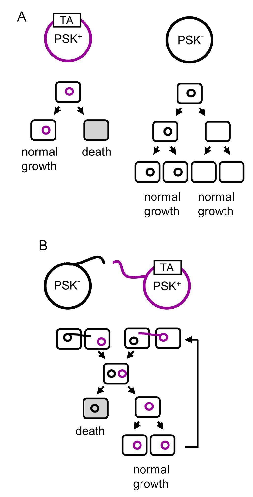 Image Result For Vertical Gene Transfer