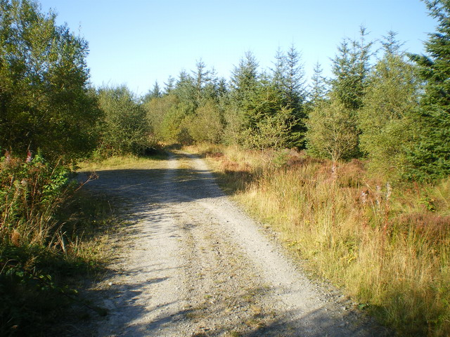 Track junction in the Dyfnant Forest - geograph.org.uk - 1508325