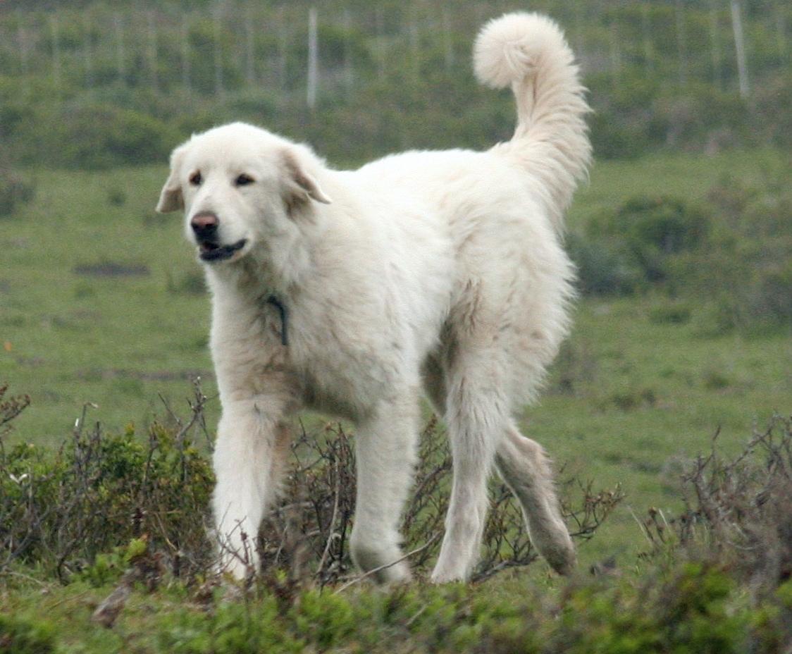 Dog Breeds A Z Akc