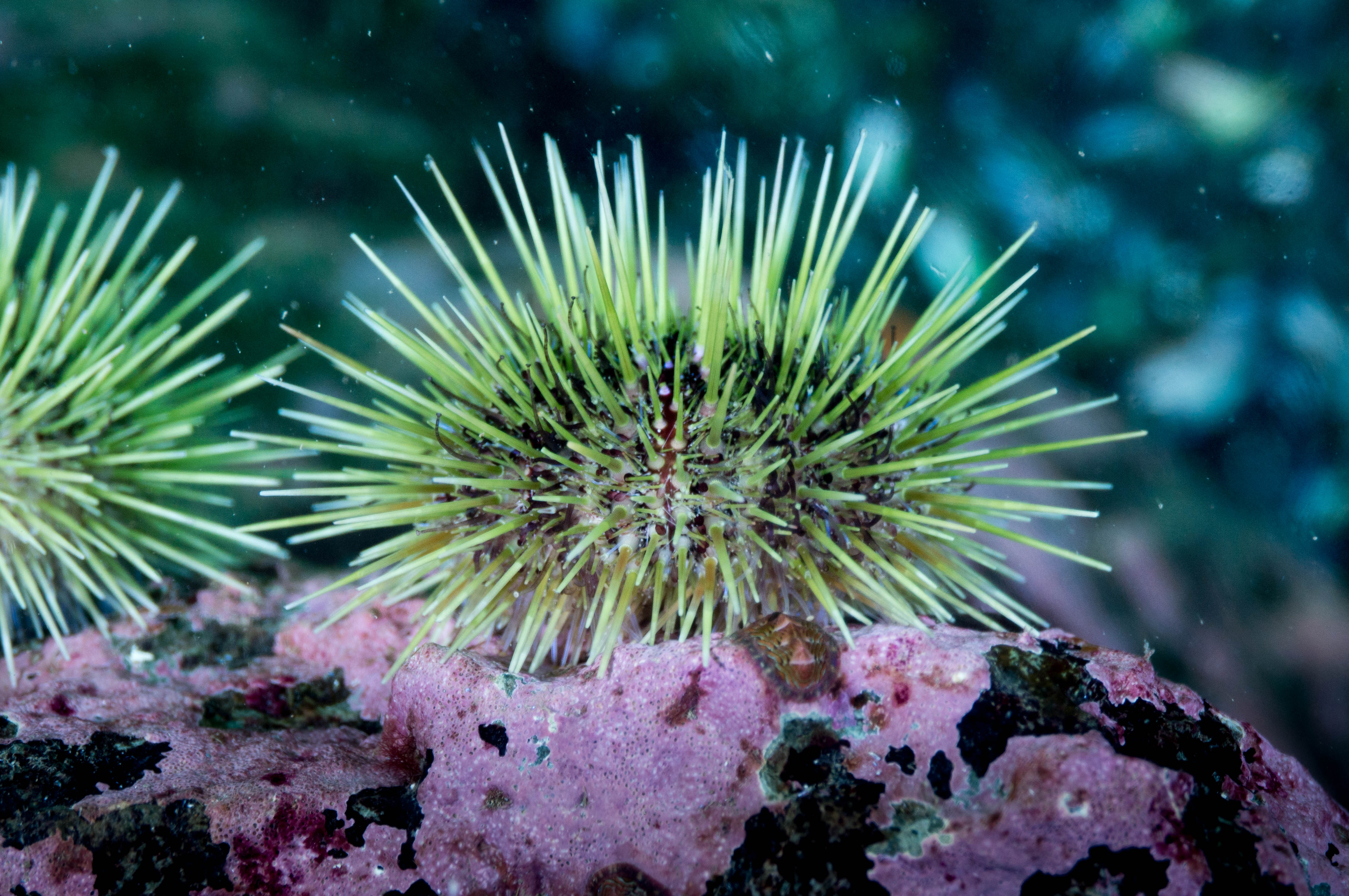 languagehatcom  Urchin