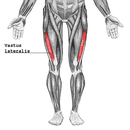 Músculo vasto lateral - Wikipedia, la enciclopedia libre