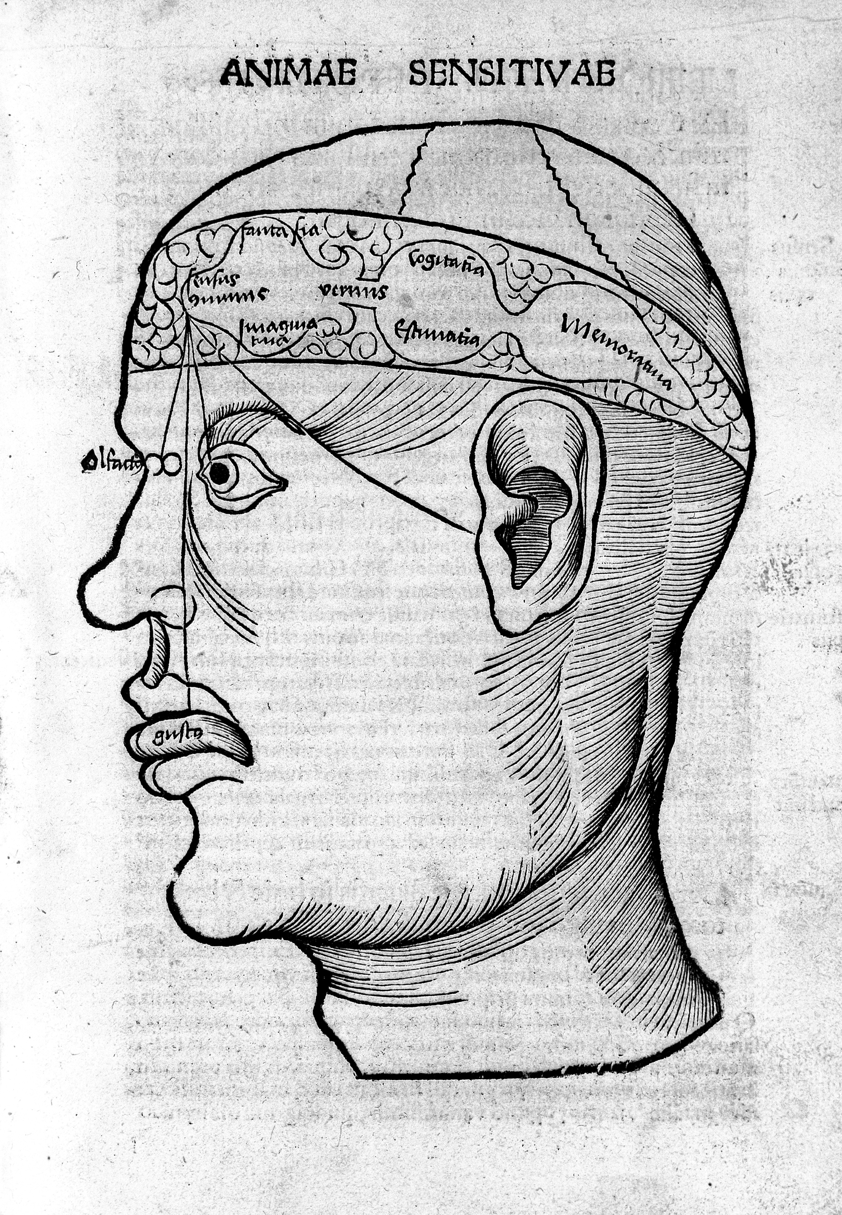 Filewoodcut Of Head Showing Cerebral Ventricles Wellcome M0000436