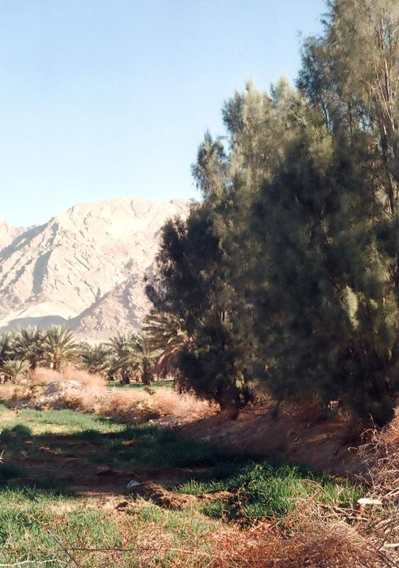 بخش احمدی