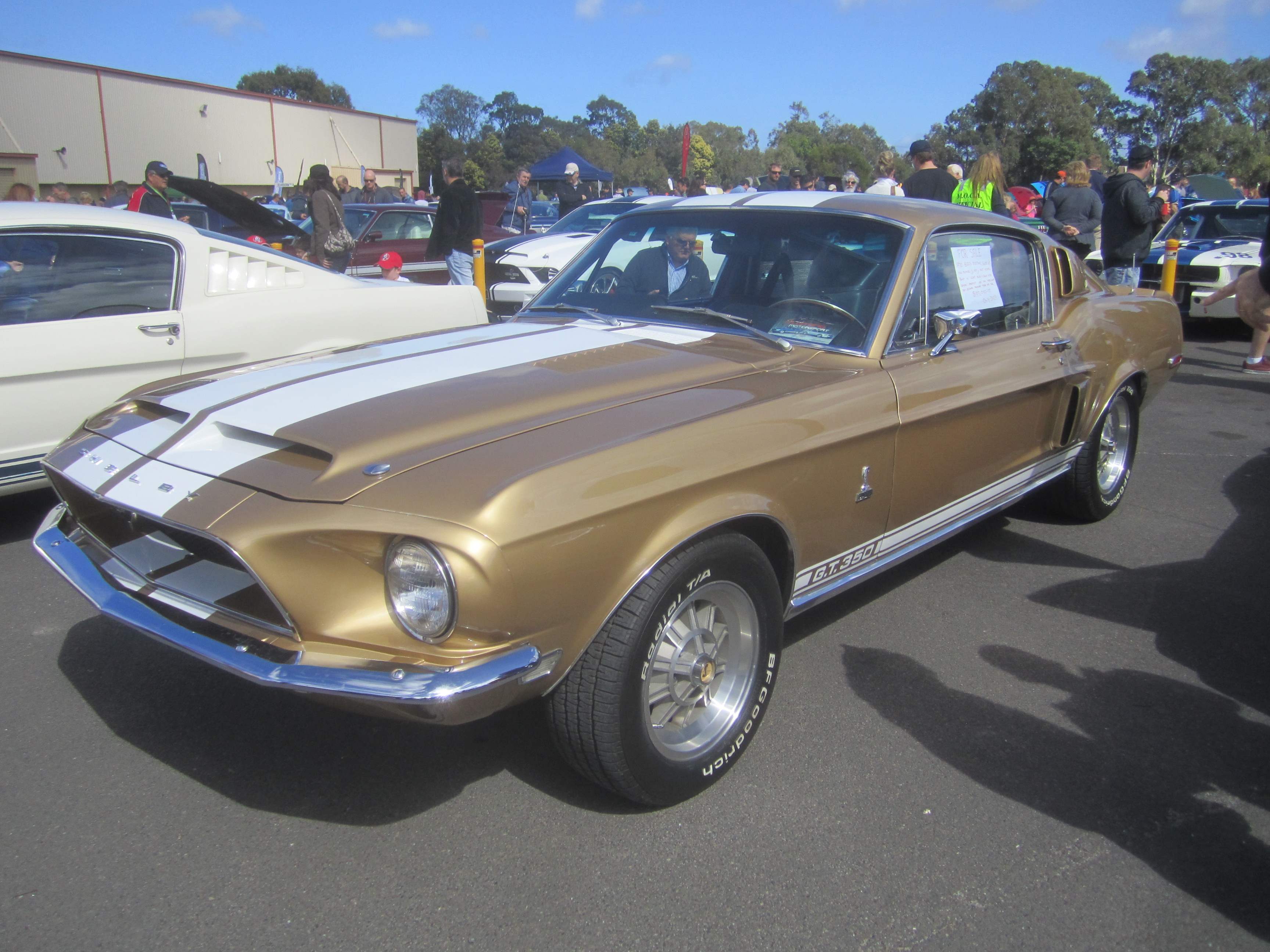File 1968 Shelby Gt350 Fastback Jpg Wikimedia Commons
