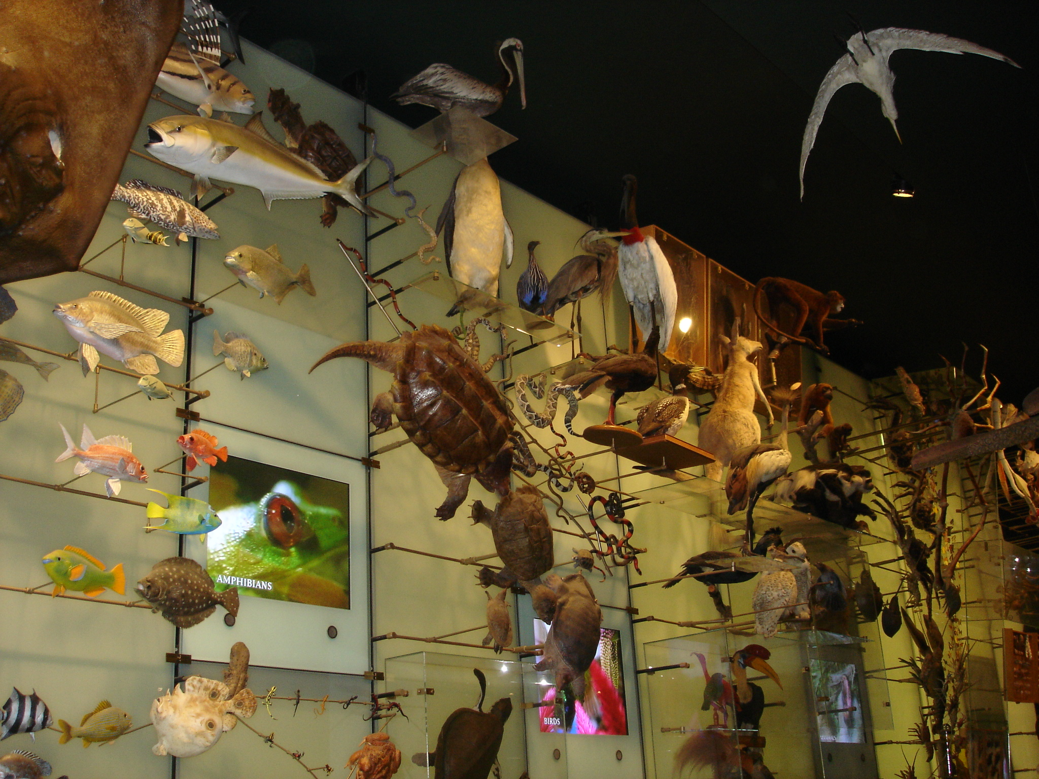 Natural History Museum Los Angeles Aaa Discount