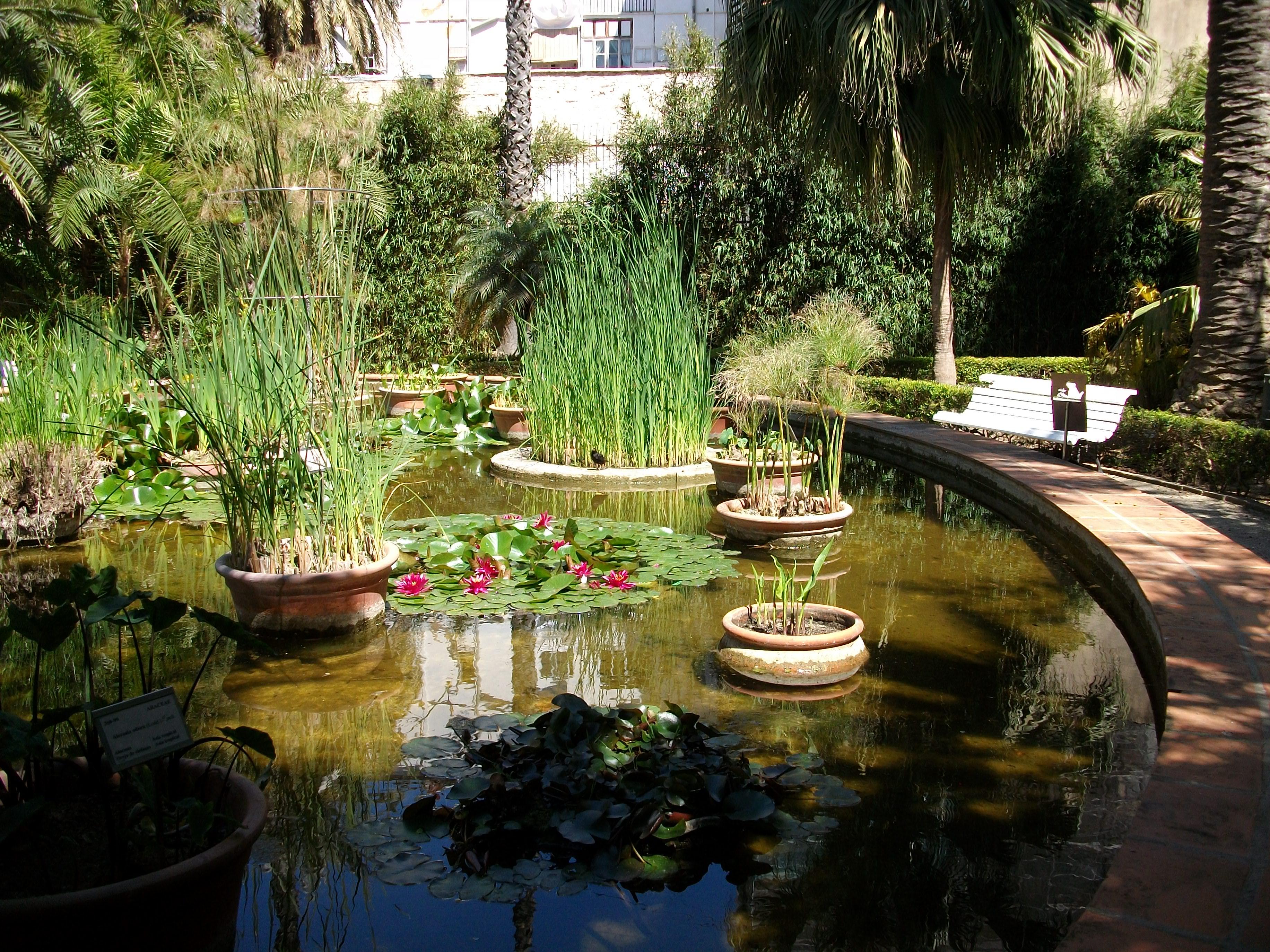 Fitxer bassa del jard bot nic de val ncia jpg - Jardin botanico valencia ...