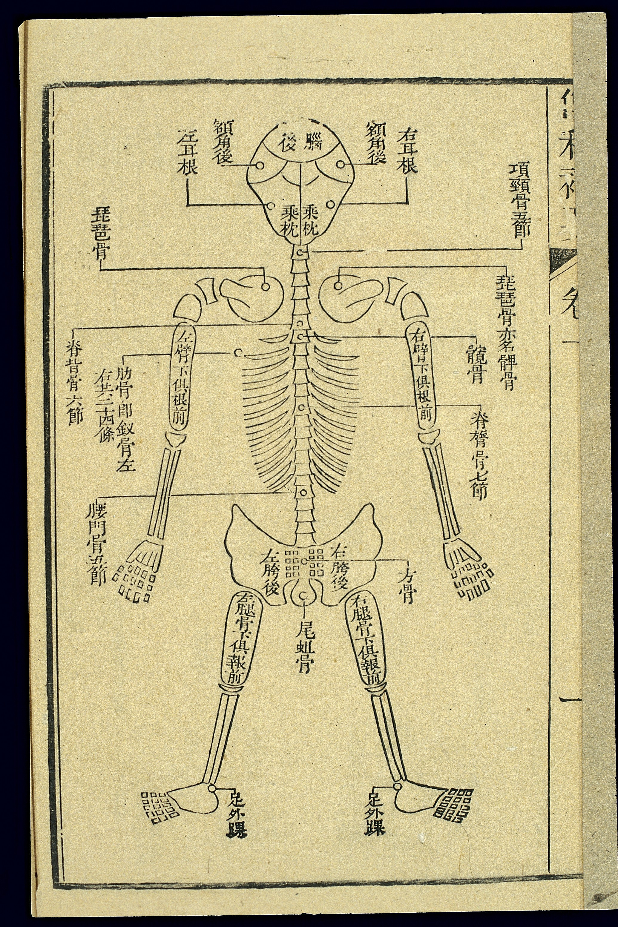 Size conversion chart china to uk edgrafik size conversion chart china to uk chinese c19 woodcut forensic chart of the skeleton geenschuldenfo Images