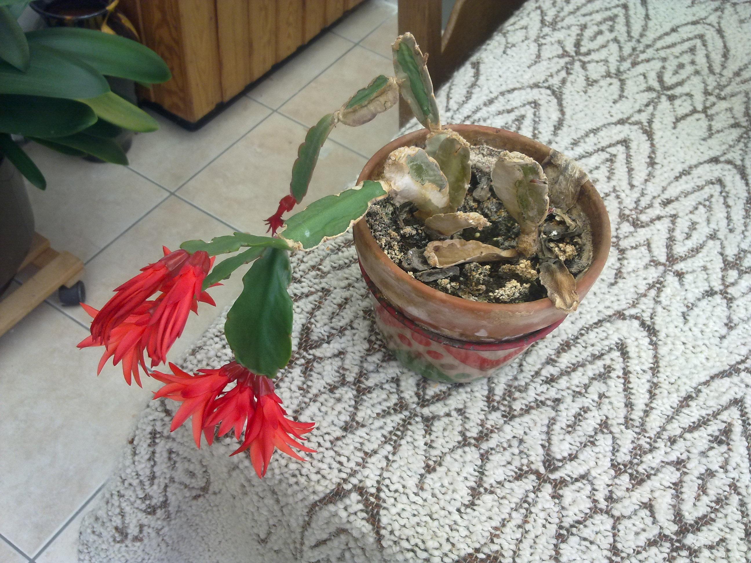 Pot De Fleur Interieur Por Grosse Plante Decor Gris