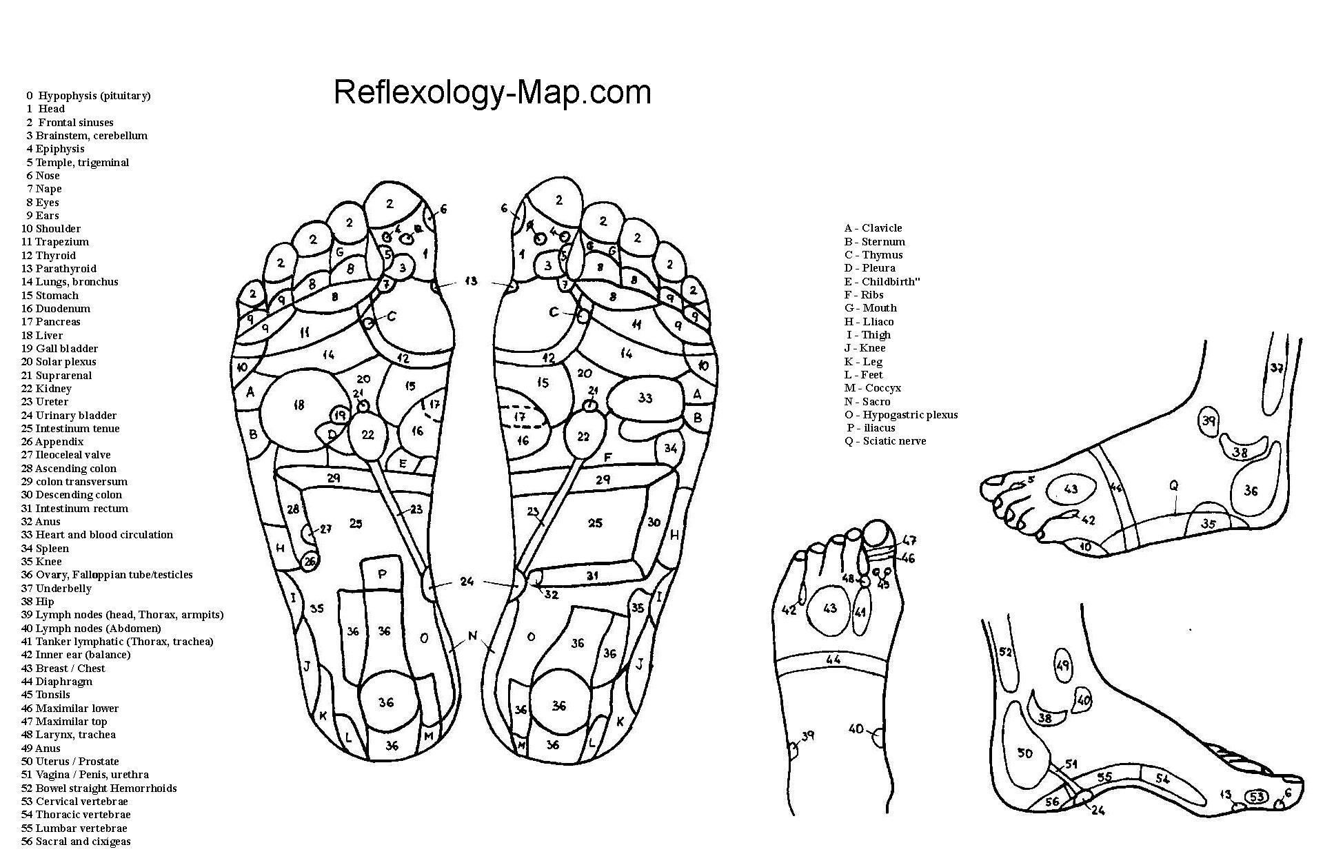 Foot Reflexology Map File:Foot Reflexology chart.   Wikimedia Commons Foot Reflexology Map