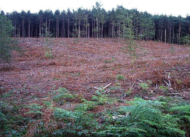 Forest Clearance, Sherwood Pines - geograph.org.uk - 64646