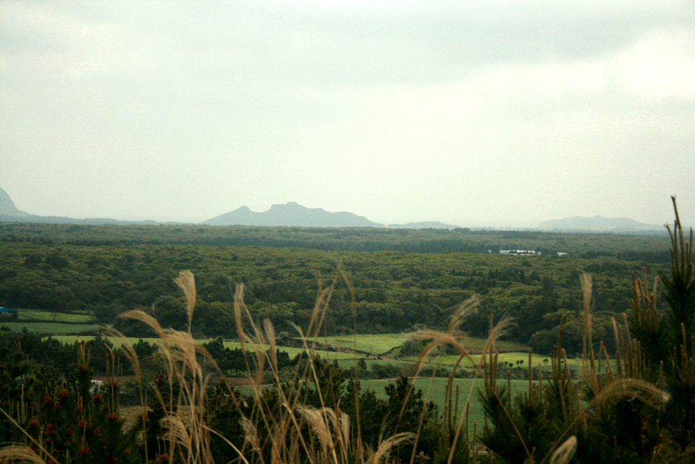 File:Gotjawal Forest on Jeju Island01.jpg  Wikimedia Commons