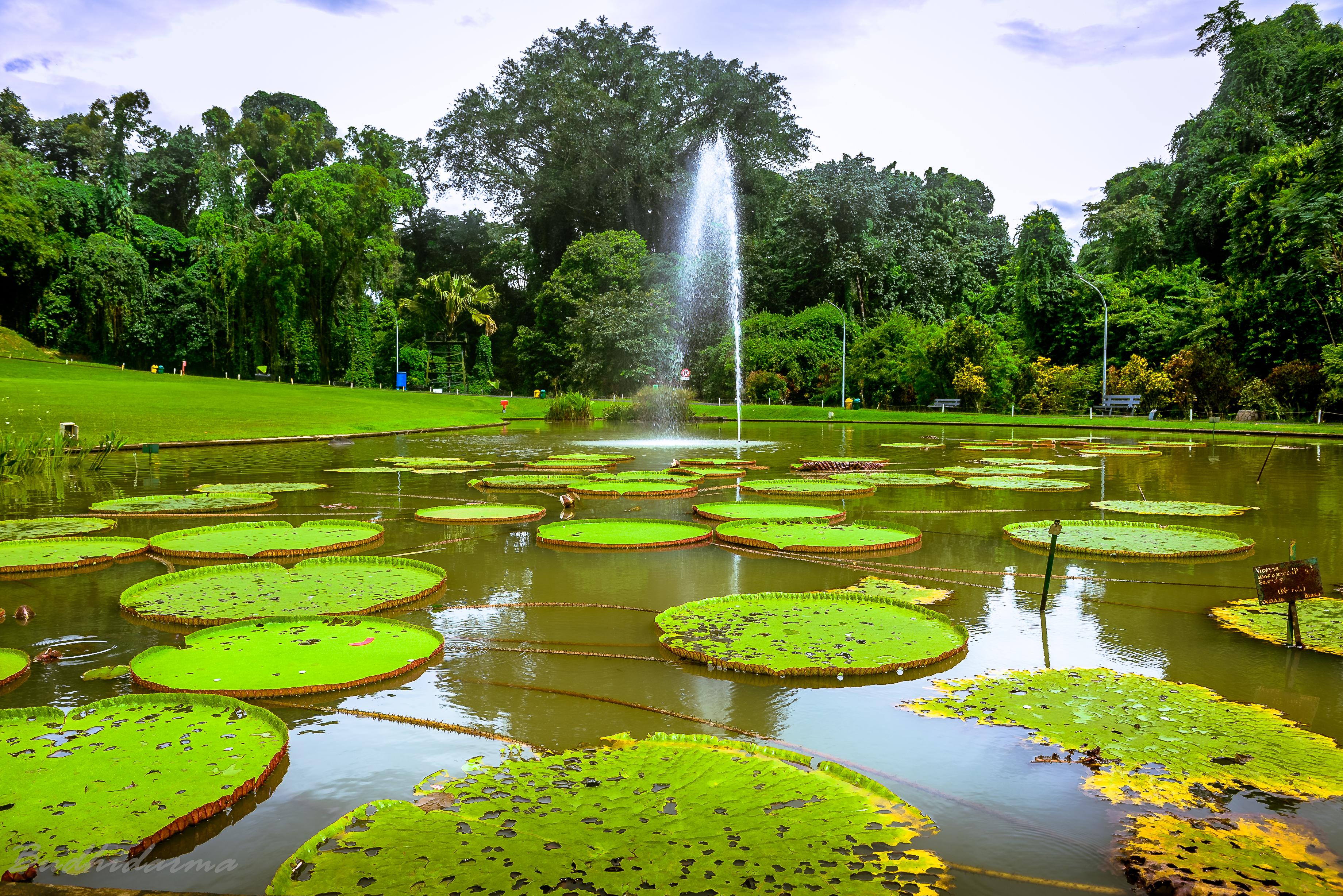 Kebun Raya Bogor Wikipedia Bahasa Indonesia Ensiklopedia Bebas