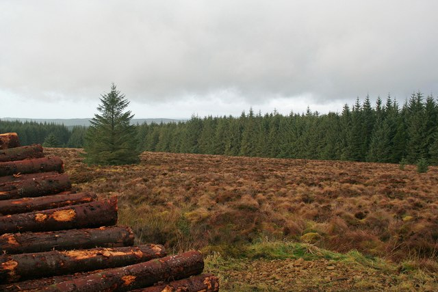 Kershope Forest - geograph.org.uk - 663066