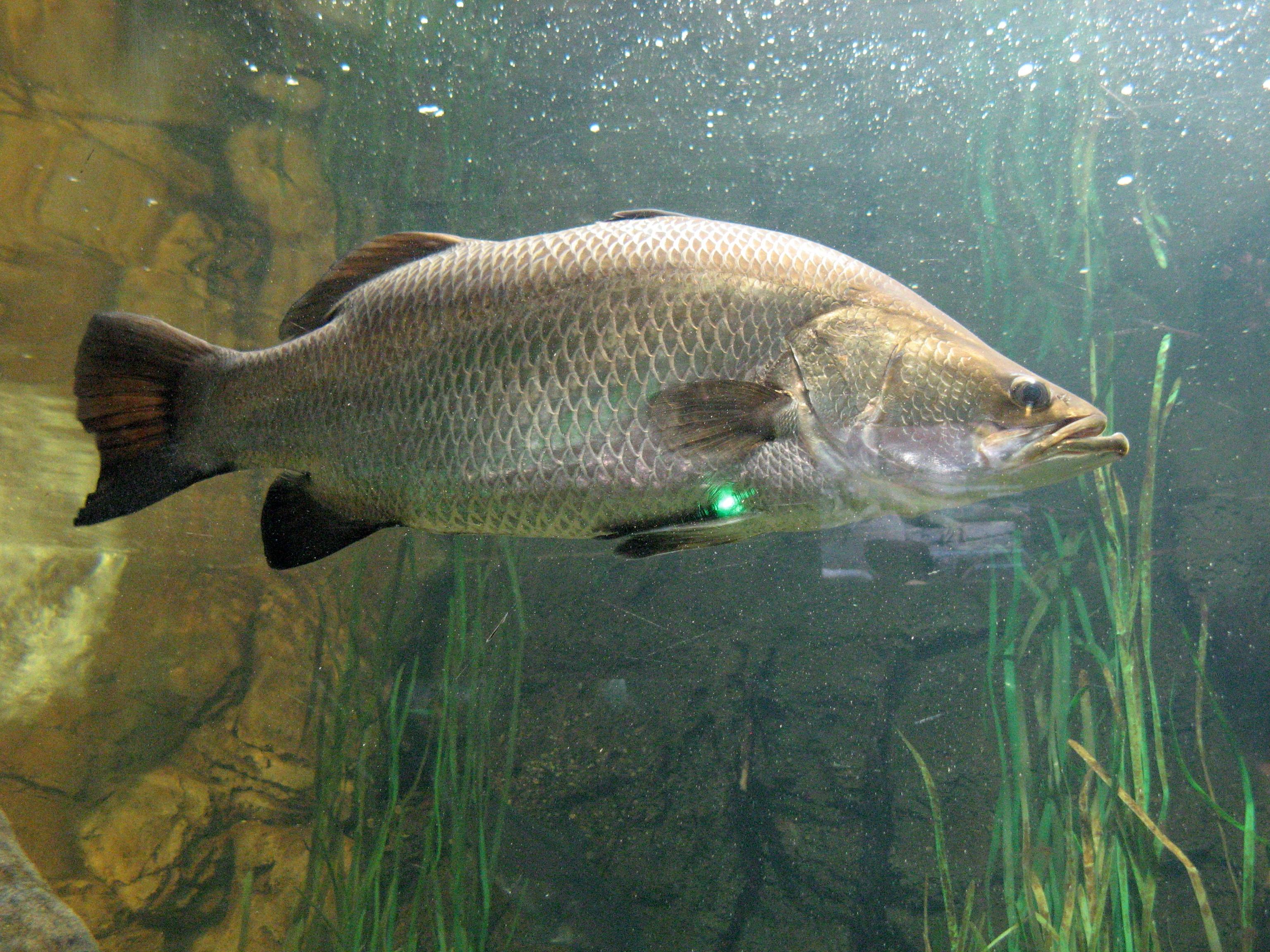 ทำไมเราไม่สามารถเลี้ยงปลาทะเลในน้ำจืดได้ - สถานแสดงพันธุ์สัตว์น้ำ ...