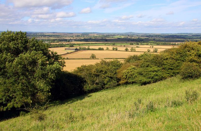 Looking across woodland to the northeast of the Burton Dassett Hills - geograph.org.uk - 1451637