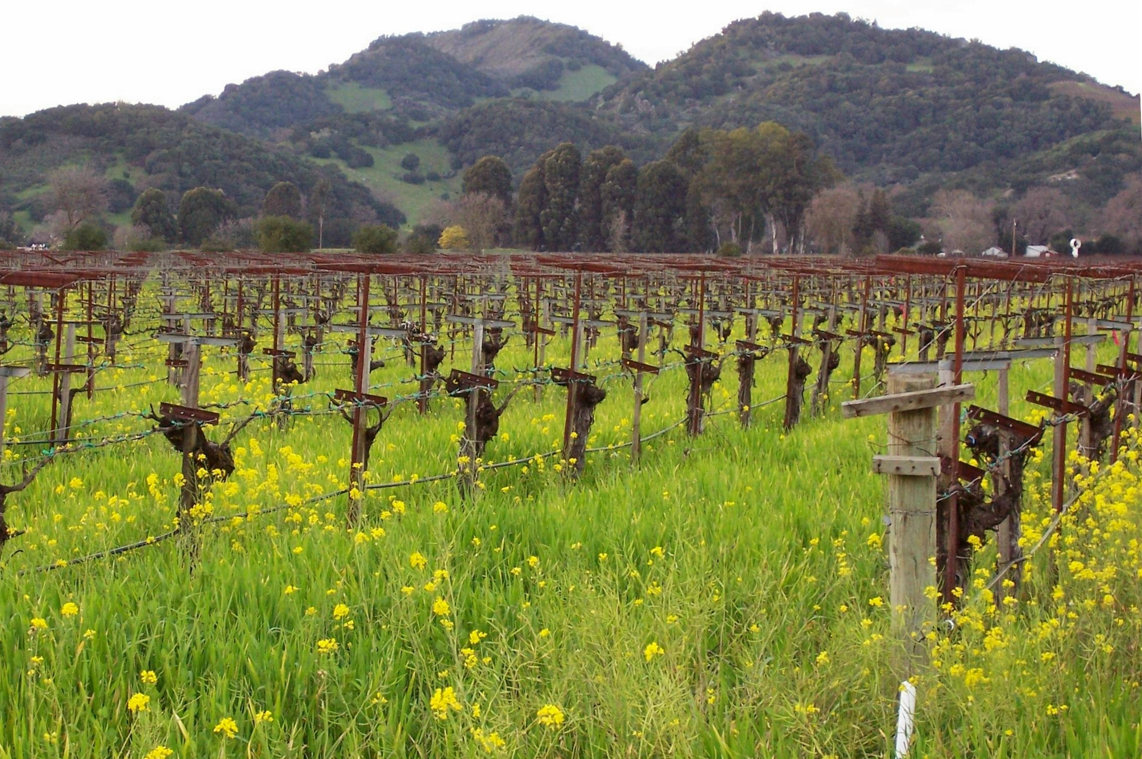 20 Napa Valley Musts That Are So Much More Than Wine
