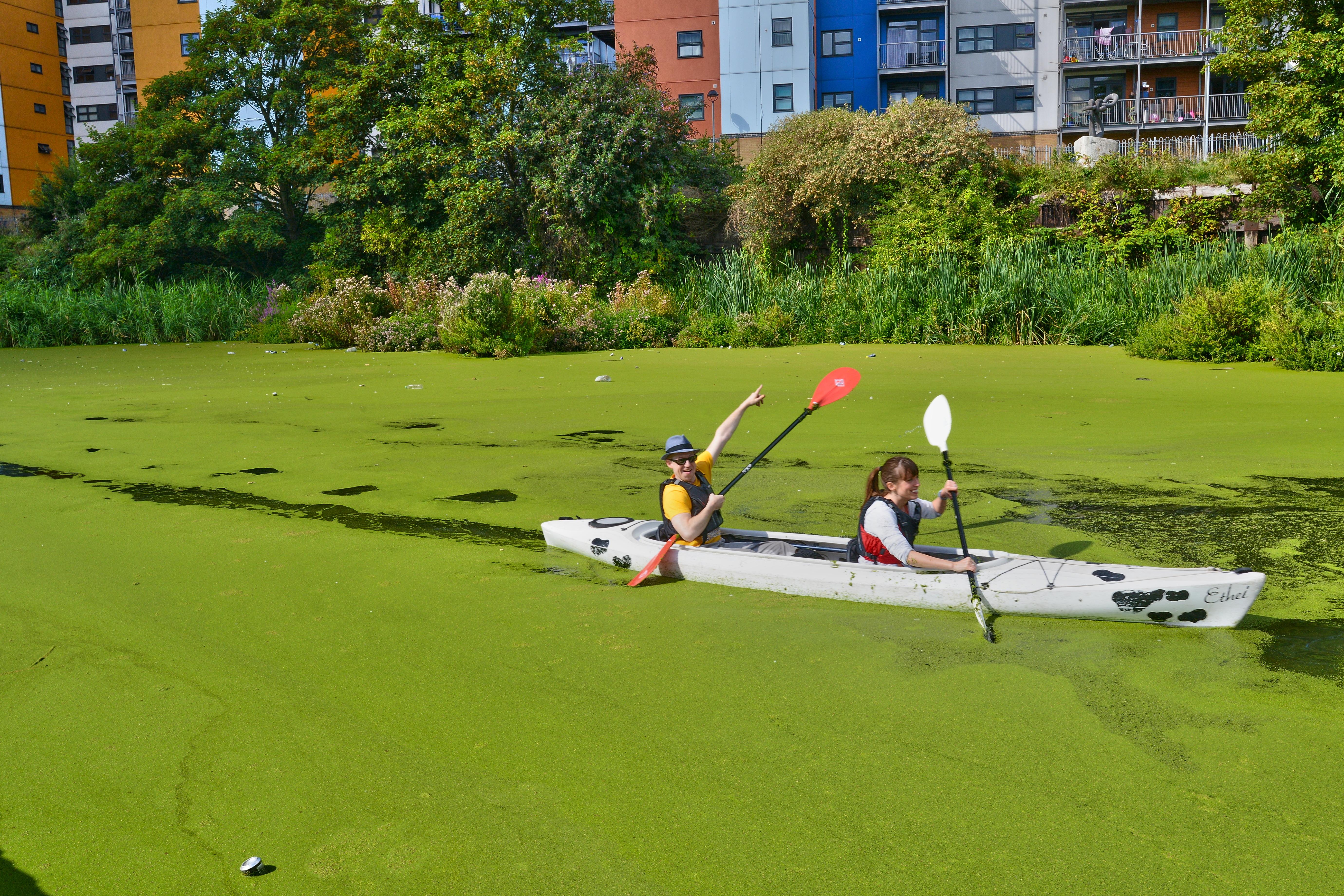 Toxic Algae Blooms Across the U.S.