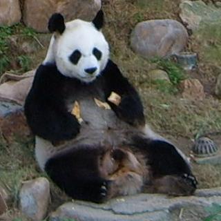 Fil:Panda-AnAn.jpg